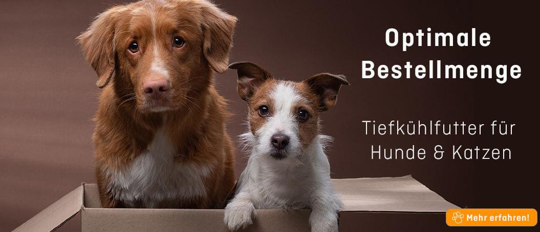 FrostFutter BARF Shop: Optimale Bestellmenge für Hunde- und Katzenfutter