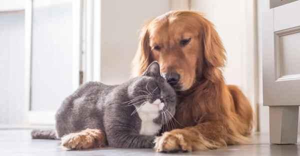 FrostFutter-Uebergewicht-Hund-Katze-min
