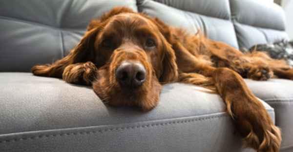 FrostFutter-Stubenreinheit-erwachsene-Hunde-min
