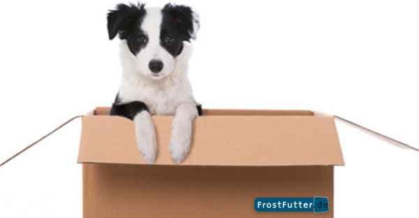 FrostFutter-BARF-Shop-DHL-Versand-Infos