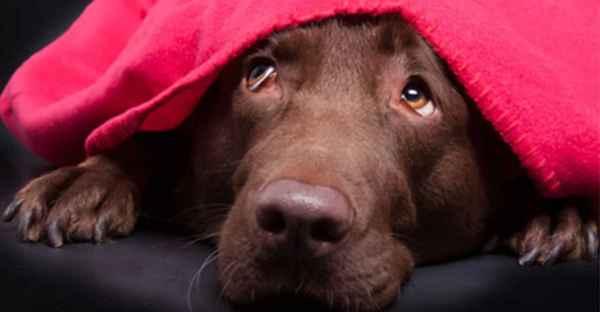 FrostFutter-Magazin-Beitrag-Hunde-Angst-vor-Silvester