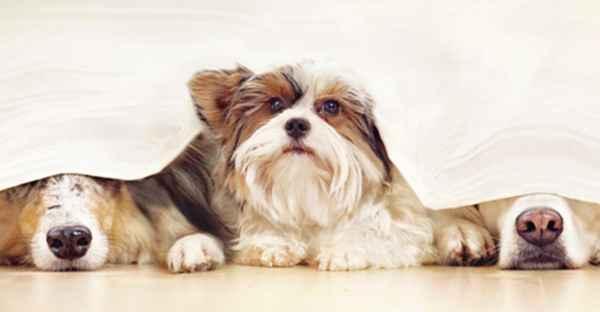 FrostFutter-BARF-Shop-Ist-mein-Hund-gestresst_Tipps-und-Infos