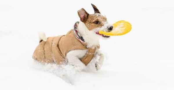 FrostFutter-Hunde-Mantel-min