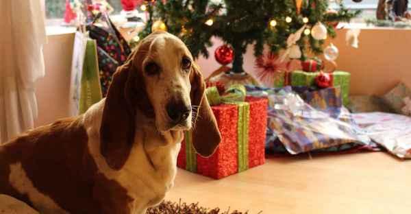 FrostFutter-Weihnachten-mit-Hund-und-Katz-min
