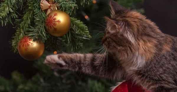 FrostFutter-BARF-Magazin-Weihnachten-mit-Katzen