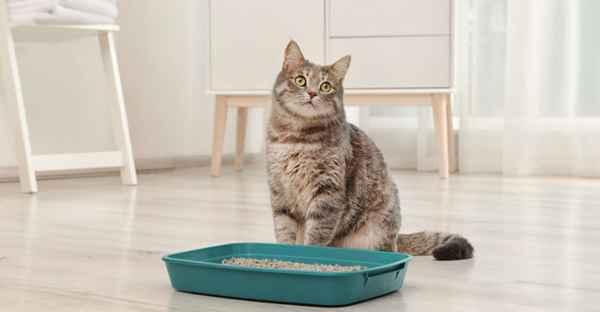 FrostFutter-BARF-Magazin-Unsauberkeit-bei-Katzen